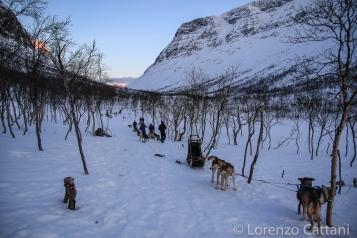 Husky Safari fiordo di Lyngen