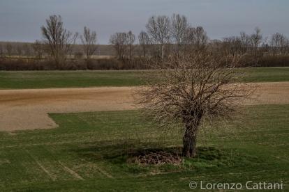 La Parma morta: il vecchio gelso