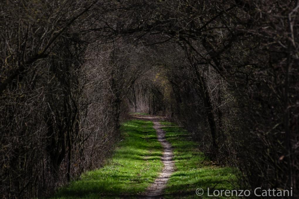 La Parma morta: il tunnel di biancospino