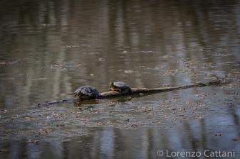 La Parma morta: tartarughe al sole