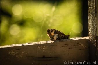 3/8/2019 - farfalle alla Pietra Perduca